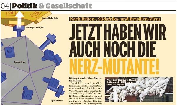 Bild am Sonntag Artikel zur dänischen Corona Mutante